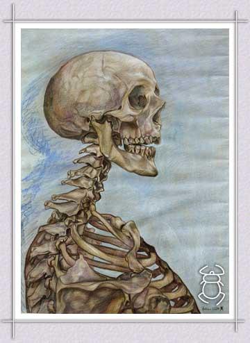 squelette.ii